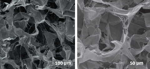 OTHER BI-LAYER MATRIX SEM photography